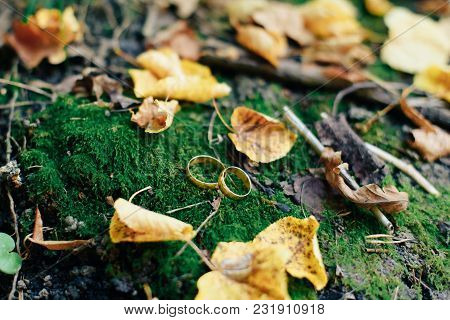 Golden Bridal Wedding Rings On Moss And Autumn Leaves 1