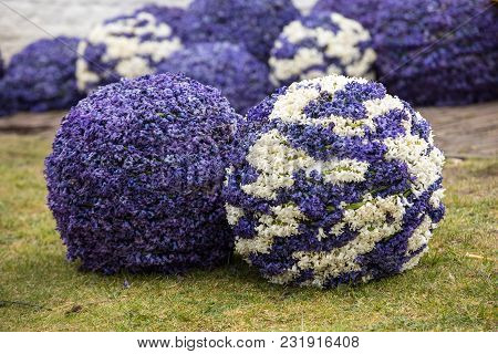 Noordwijkerhout, Netherlands - April 21,  2017: Balls Made Of Hyacinths For The Traditional Flowers