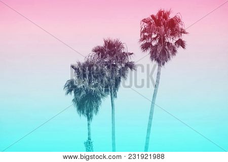 Three Palm Tree Silhouettes, In A Row, With Multi Pastel Color Background