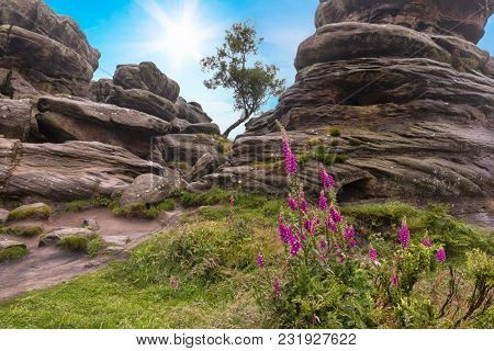 Lone tree between rock formations at Brimham Rocks, Yorkshire Dales, England