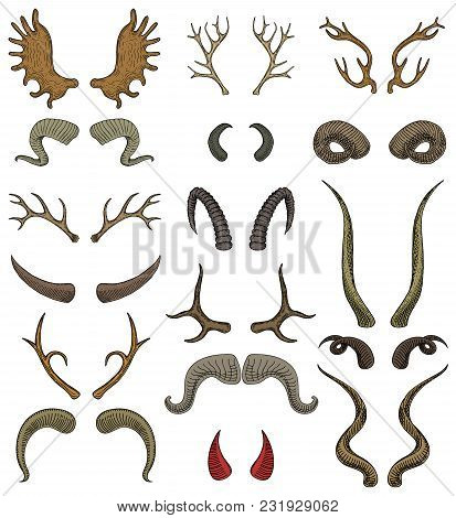 Horn Vector Horned Wild Animal And Deer Or Antelope Antlers Illustration Set Of Horny Hunting Trophy