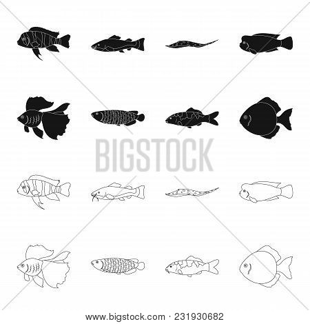 Discus, Gold, Carp, Koi, Scleropages, Fotmosus.fish Set Collection Icons In Black, Outline Style Vec