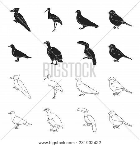 Gull, Toucan And Other Species. Birds Set Collection Icons In Black, Outline Style Vector Symbol Sto