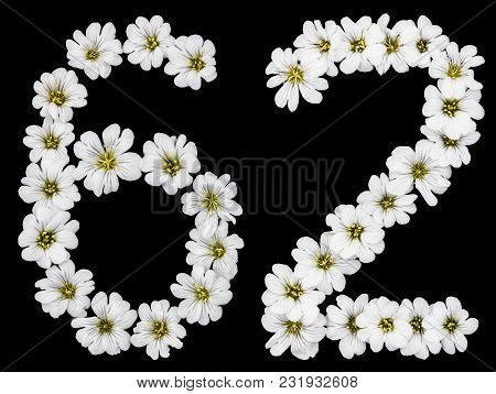 Arabic Numeral 62, Sixty Two, Sixty, Six, Two, From White Flowers Of Cerastium Tomentosum, Isolated