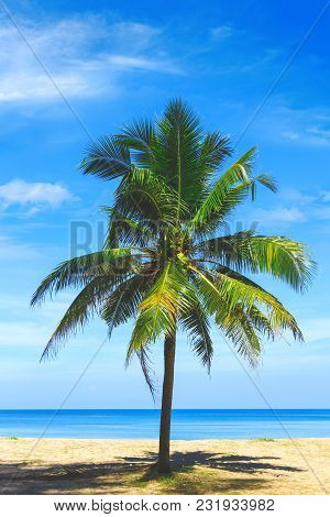 Palm Tree Close Up View. Picturesque View Of Andaman Sea In Phuket, Thailand. Seascape. Tropical Bea