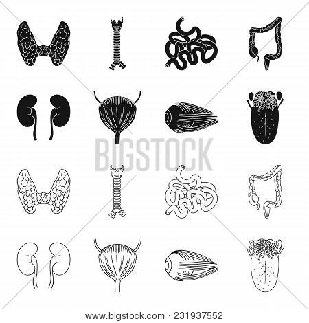 Kidney, Bladder, Eyeball, Tongue. Human Organs Set Collection Icons In Black, Outline Style Vector S