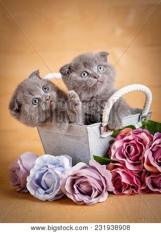Kittens, Scottish Cat. A Couple Of Cats Near Flowers. Bouquet Of Flowers. Bouquet Of Roses. Gift Kit
