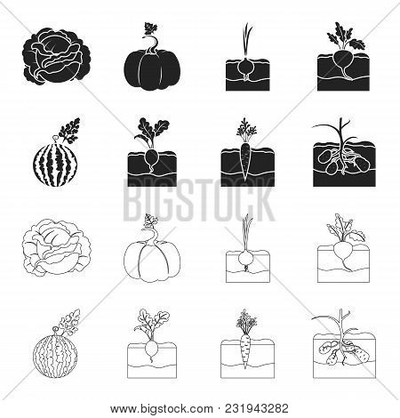 Watermelon, Radish, Carrots, Potatoes. Plant Set Collection Icons In Black, Outline Style Vector Sym