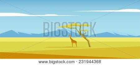 African Vector Landscape With Giraffe Standing Under The Acacia Tree In The Middle Of Savannah And M