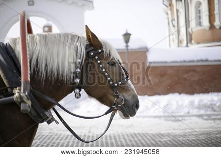 A Horse With A White Mane And A Long Bang On A Profile Photo, A Horse Harnessed To A Wagon And Decor