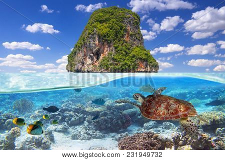 Green turtle swimming underwater at the tropical island