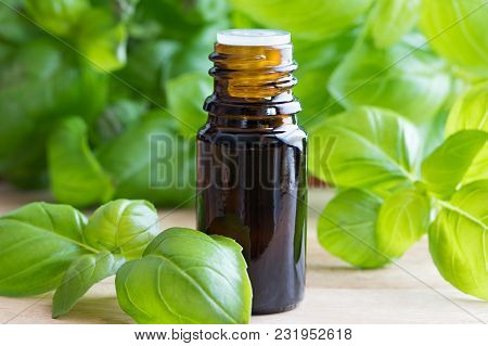 A Dark Bottle Of Basil Essential Oil With Fresh Basil Leaves