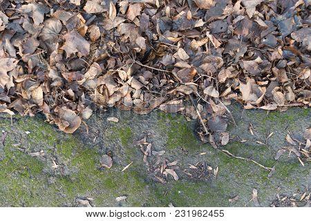 Dull Brown Fallen Leaves Near Sidewalk From Above