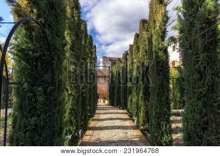 Pathway Among Hedge In Generalife