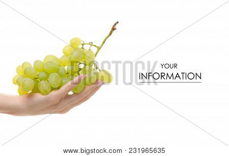 Grapes In Hands On White Background Isolation