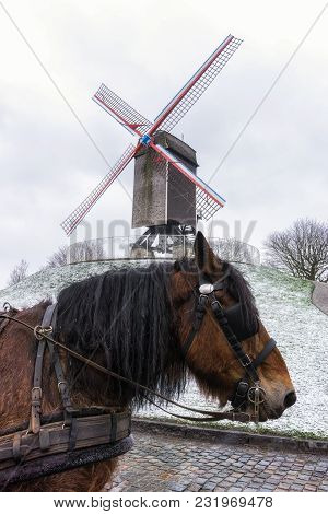 Bruges Windmill And A Horse