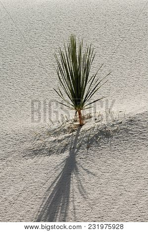 A Single Yucca Plant Emerges From The Sand In White Sands National Monument, New Mexico.