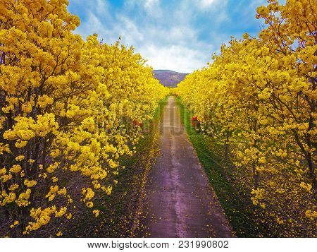 Aerial Photo Bright Yellow Blossom Flower Top View Of Green Field For Summer And Spring Holiday Back
