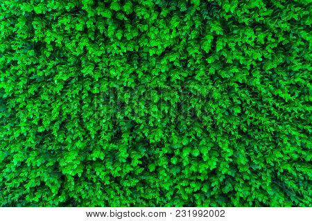 Green Grass Background Of Artificial Green Lawn Grass On The Floor