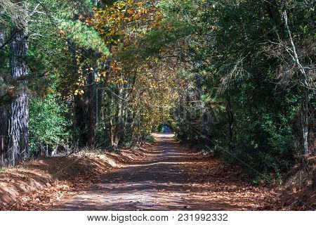 Picturesque Tree Tunnel Over Countryside Road On Autumn, Fall Day