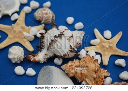Starfish With Shells And Stones Against A Blue Background With Copy Space. Summer Holliday. Nautical