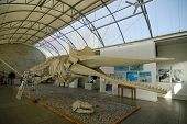 Whale`s bone in World Ocean Museum. Kalinigrad (Koenigsberg). Russia. poster