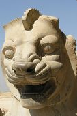 Sculpted stone lion's head in the ruins of Persepolis (Pars). Persepolis was the capital of the ancient Persian empire. It is now located in Iran. poster