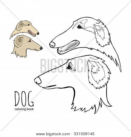 Russian Borzoi. Hunting Breed Dogs. Coloring Book Page. Vector Illustration. Vector Logo Pure-bred