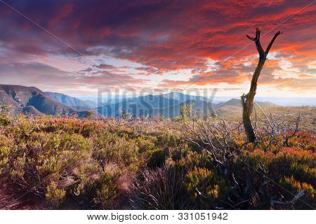 Scenic Mountain Landscape With Bushland Heath And Old Dead Tree In Foreground And Beautiful Sky Over
