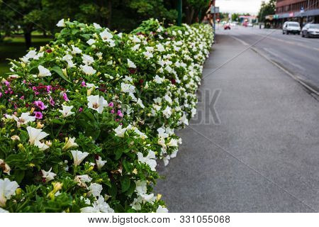 flowering bushes on a city street