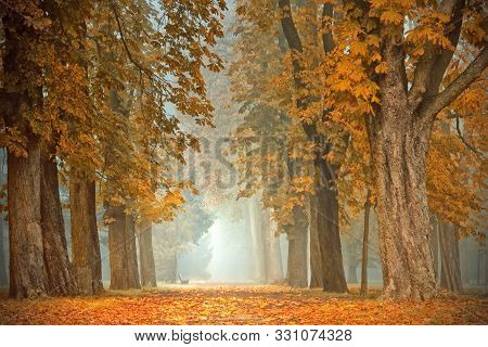 Picturesque Misty Avenue In Autumn Colors. Trees With Yellow Foliage Along The Alley.