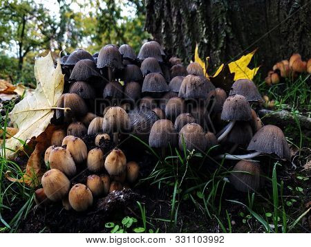 Toadstool Mushrooms In The Wild Forest