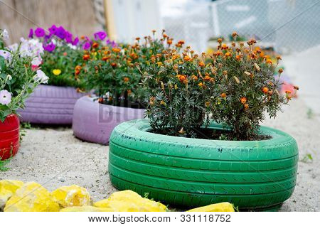 Different Types Of Flowers Blooming  In Pots Made Of Multicolored Car Tires On A Esplanade Near Sea