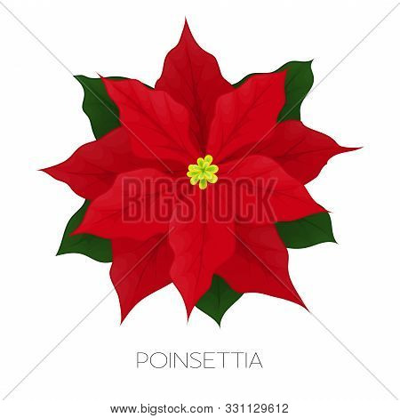 Poinsettia Flower Isolated On White. Icon For Christmas Or New Year Greeting Card Design. Vector Car