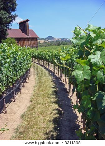 Attractive vineyard in Northern California in the Anderson Valley vertical view poster