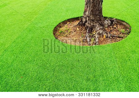 Green Artificial Turf, Leaving Space For Trees., Green Artificial Turf Surrounded The Tree.