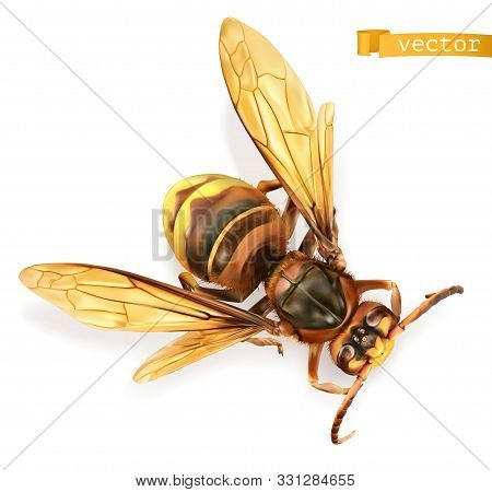 Wasp, Bee, Hornet. 3d Realistic Vector On White Background