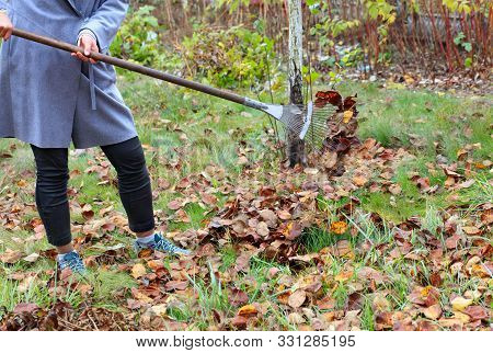 The Gardener Cares For The Green Lawn, Raking The Fallen Brown Leaves In The Autumn Garden With A Me