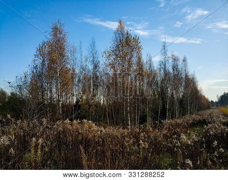 Along The Forest Is A Field. Autumn Landscape.