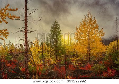 Autumn Landscape. Sunset On The Background Of A Recovering Forest After The Eruption Of Tolbachik Vo