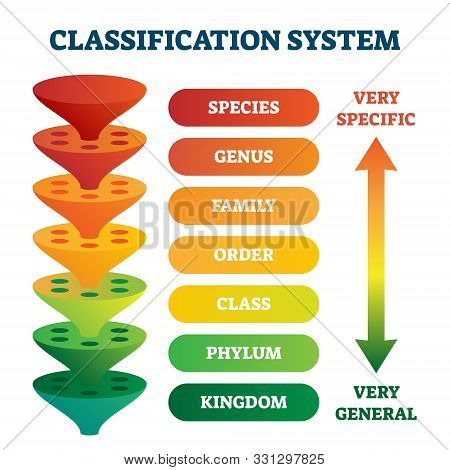 Classification System Vector Illustration. Labeled Taxonomic Rank Scheme. Educational Species, Genus
