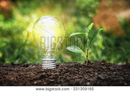 Energy Saving Lamps And Planting Trees On The Soil Ground Electric Energy Saving Concept