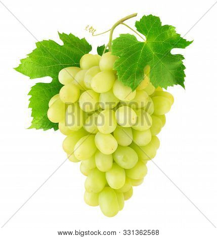 Isolated Grapes. Bunch Of Thompson Table White Grapes Hanging On A Vine Isolated On White Background