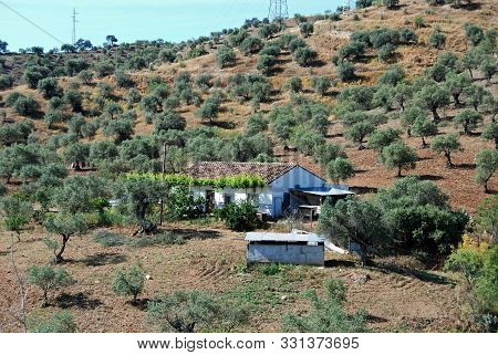 Small Farmhouse Surrounded By Olive Groves, Alora, Malaga Province, Andalucia, Spain, Western Europe