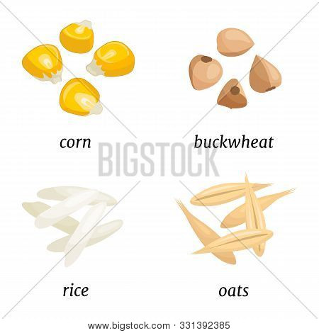 Cereal Composition Isolated On White Background. Grains Of Rice, Oats, Corn And Buckwheat.