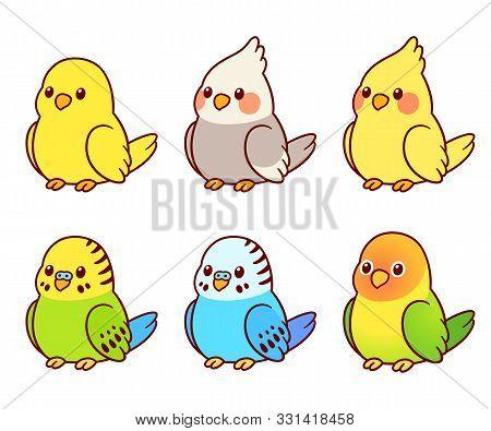 Cute Cartoon Pet Birds Illustration Set. Cockatiel, Parakeet, Canary, Lovebird. Small Parrots Isolat