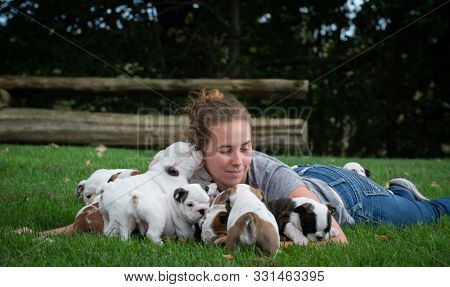 woman playing with a litter of English bulldog puppies outside in the grass in summer