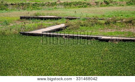 Boardwalk Over Hyacinth And Weed Congested Lagoon At Botanic Gardens. Open For Public To Walk Over.