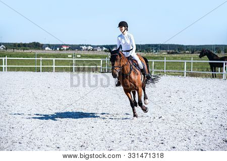 Horse Riding . Young Girl Riding A Horse . Equestrian Sport In Details. Sport Horse And Rider On Gal