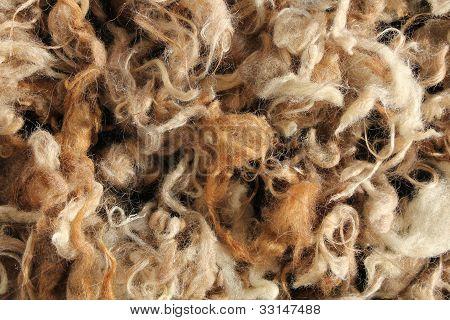 Wool Mutton Natural